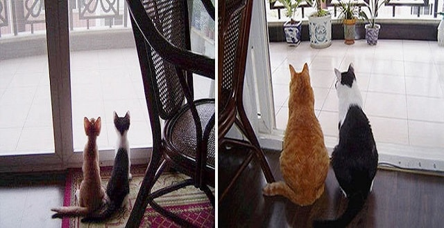20 Before/After Photos Show The Impact A Loving Home Has On Cats