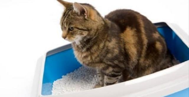 How to Toilet Train Your Cat in 4 Easy Steps! – VIDEO!