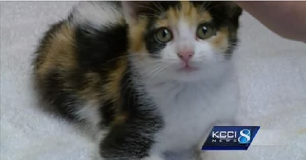 Calico Kitten Survives Lawn Mower Accident, Finds New Home!