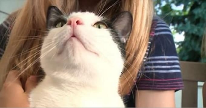 Cat saves Chicago-area family from Rabies-infested Bat!