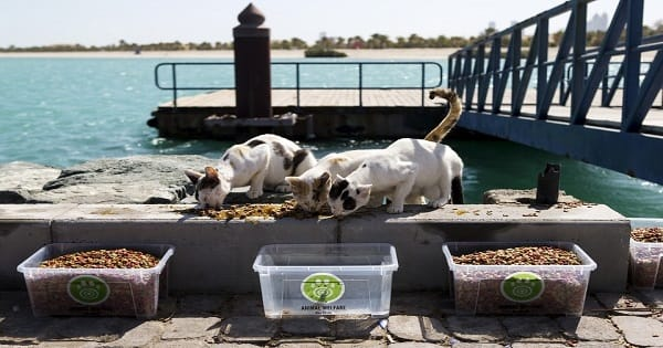 Vets Face Cat and Mouse Game to Sterilize Lulu Island's Burgeoning Feral Cat Population