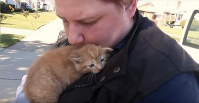 Mama Cat And Two Kittens Rescued After Being Thrown Out A Car Window