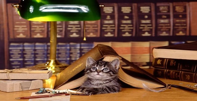 Cozy Up With a Cat at The Bartlett Library!