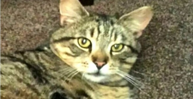 Cat Found 3 Years After Going Missing!