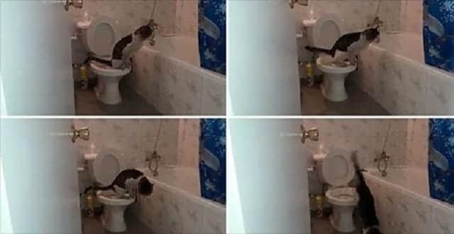 Former Feral Cat Trained Herself to Pee in Toilet! – VIDEO!