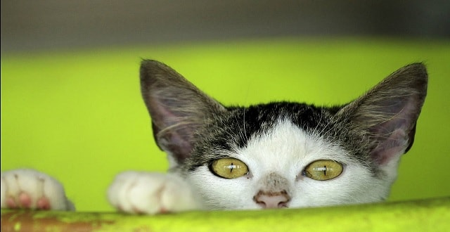 Circassia Shares Plunge After Trial of Experimental Cat Allergy Drug Fails!