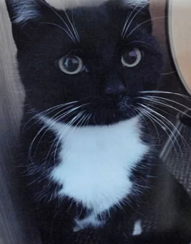 Leanne Harris's cat Toby.