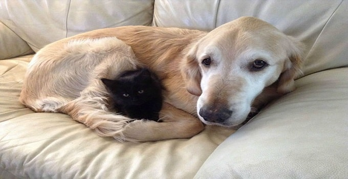 After Losing His Cat Friend to Cancer, His Owners Did the Only Thing They Could
