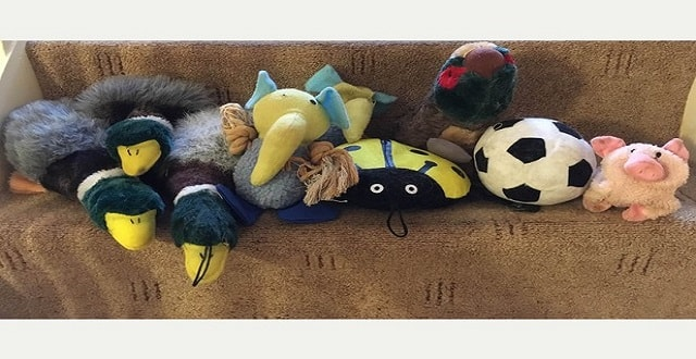 Milly, a 'Klepto' Tuxedo Cat, Brings Home Stolen Stuffed Animals To Her Human!