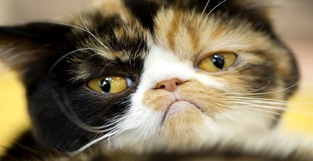 10 Reasons Why Its Best to Adopt a Senior Cat!