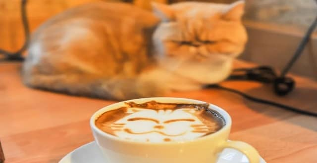 Houston's First Cat Café Is Coming Soon!