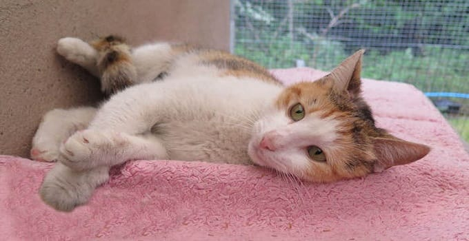 Stowaway Calico from Turkey Survives Trip to Britain on Back of a Truck, But Loses Something Along the Way