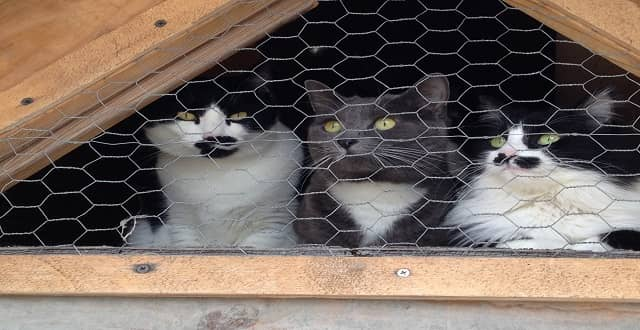 Alaska 'Cat Man' Cruises to Anchorage With His 22 Cats!
