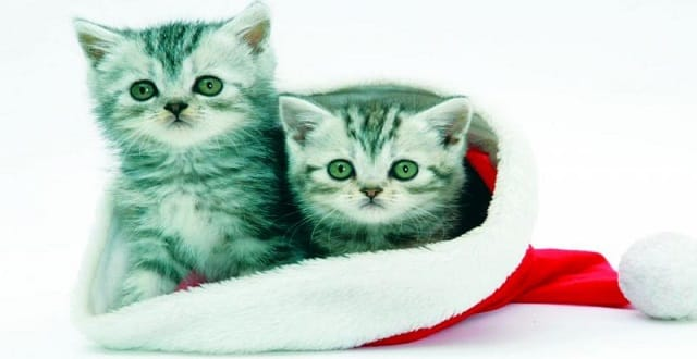 Why Owning a Cat Is Good For You, As Per Science!