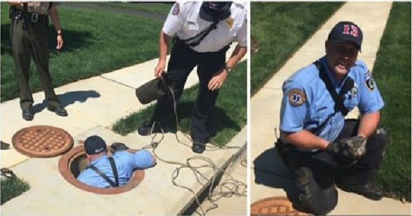 Hanover County Firefighters Rescue Kitten Trapped in Storm Drain for 3 Days!