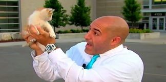Stray Kitten Interrupts Live Newscast, Meowing for Help