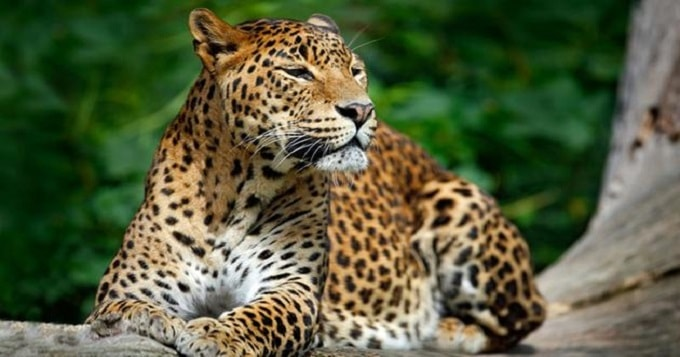 Leopard Escapes at Utah Zoo, Visitors Take Cover!