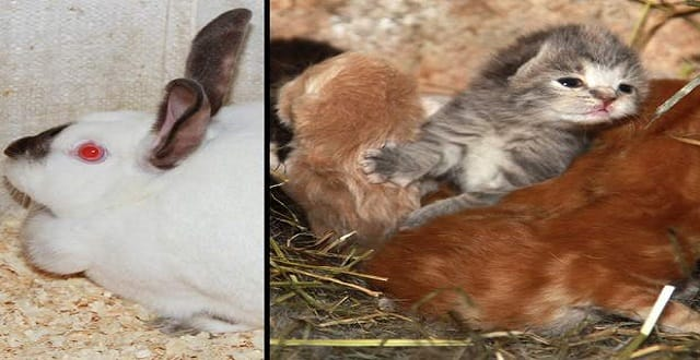 Rabbit Becomes Surrogate to Litter Of Kittens Whose Mom Was Shot!