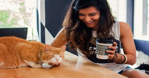 Los Angeles' First Cat Cafe Will Open This Fall On Melrose