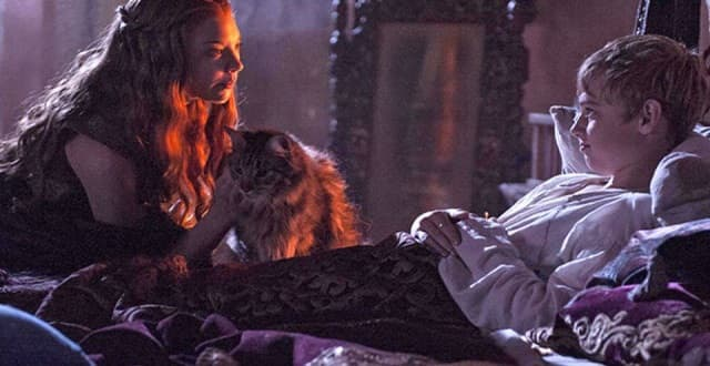 RIP Ser Pounce: 'Game Of Thrones' Cat Likely Didn't Survive The Season 6 Finale!