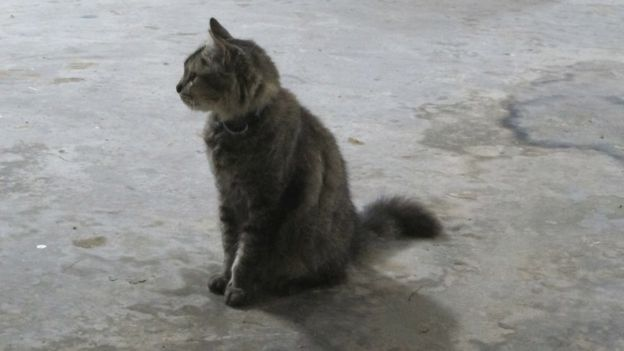 Bushy's colour and shiny coat indicate she may at one time have been a family pet