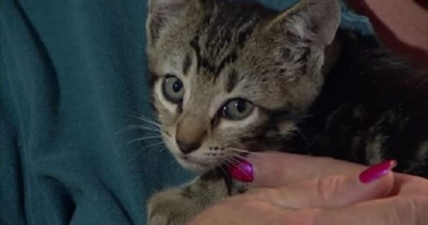 School Bus Driver Rescues Kitten Tossed From Moving Car! – VIDEO!