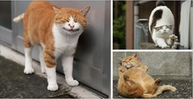 This Photographer Captured Stray Cats' Personalities!