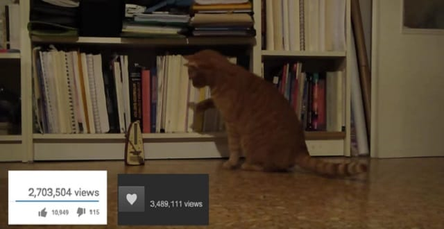 Cat Meets Metronome, Cat Reacts Hilariously, Internet Freaks Out! - VIDEO!
