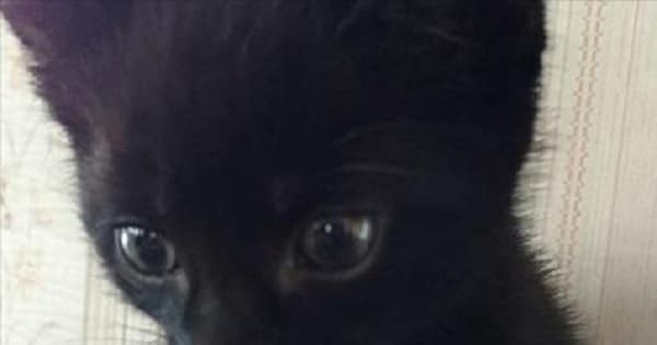 Black Kitten Survives Being Tossed from Car Window onto Highway!