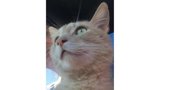 'Fred' the Stowaway Cat Takes a Ride from California to Utah