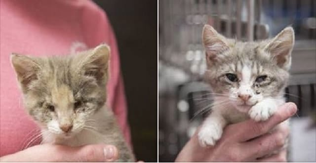 Blind Love Found in Two Kittens! – How to Care for Blind Kitten!