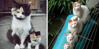 The Cutest Cat Mini-Me's in the World! -15 Photos!