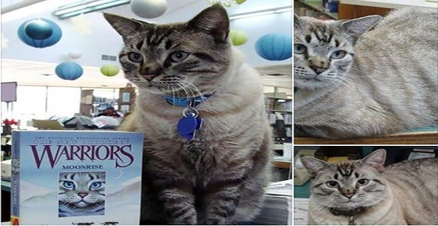"""Why Browser Was Fired from His Position as """"Library Cat""""?"""