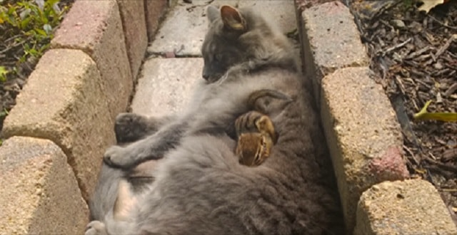 Cat Becomes Friends With A Chipmunk, Won't Stop Cuddling!
