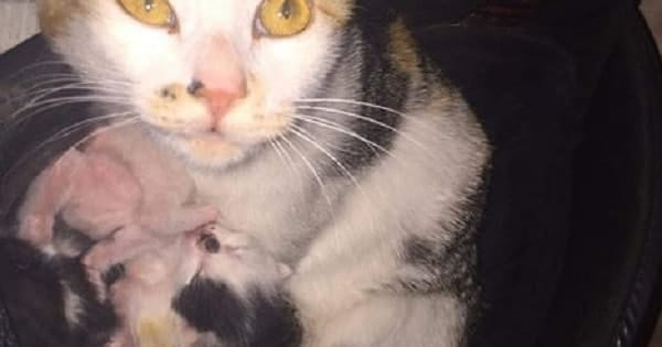 Feral Cat Delivers Her Litter of Kittens in a Hockey Team's Equipment Bag - Right at The Arena!