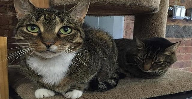Cat That Ran Away from Pet Store After Dog Attack Finally …