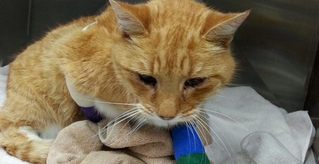 Auckland Cat Injured By Trap Has Happy Reunion With Owners!
