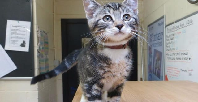 Kitten Dumped in Fife Woods 'Could Have Starved to Death'!