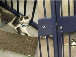 Police Officers Take Pity on Arrested Woman's Cat and Well, They Put it in Jail!