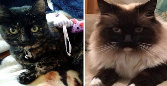 Amber, left, and Ukiyo, right, are two victims of the crazed killers