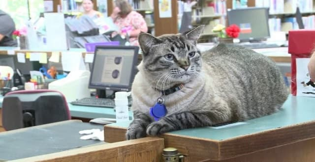 """UPDATE – Browser The Library Cat Who Was """"Fired"""" Last Week, Gets Some Good News!"""