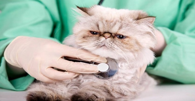 Spike in Rare Cat Disease Puts Twin Cities Pet Owners on Alert!