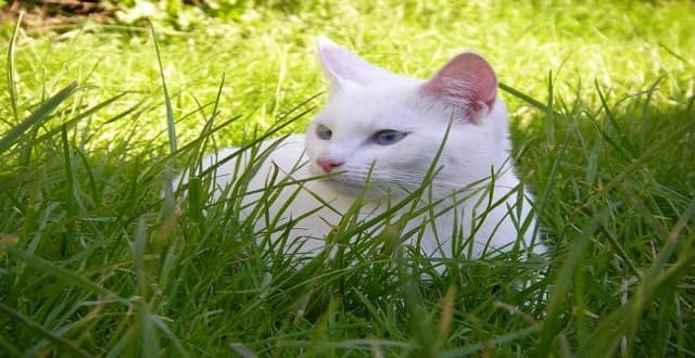 8 Tips to Keep Your Cat Safe in the Garden This Summer!