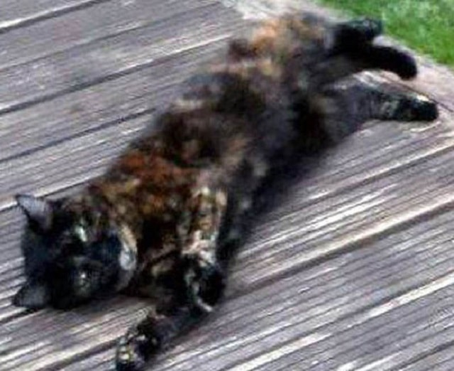 Amber was found in a wooded area in Croydon after being killed