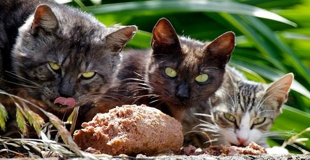New Zealand Plans to Kill Every Rat, Feral Cat, and Possum!