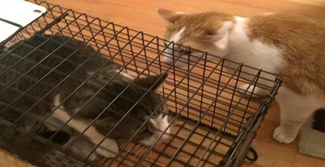 Graham back home with his brother Neko. [Max Bever]