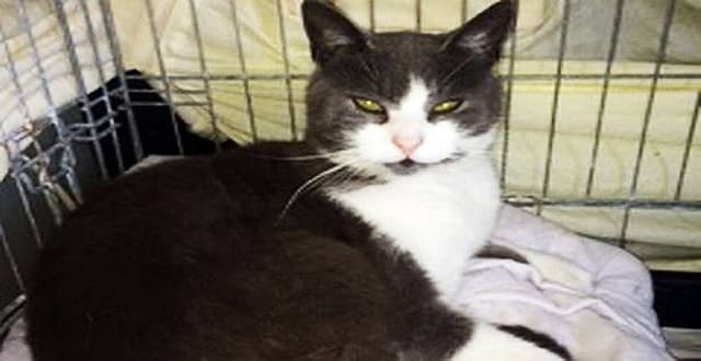 The cat at Garston Animal Rescue in Liverpool