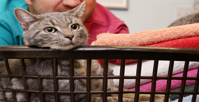 Bobby the Cat Uses Up One of His Nine Lives After Surviving Washing Machine Spin Cycle!