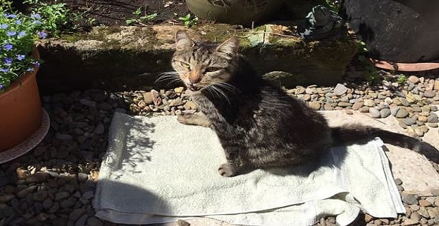 Piggy the cat is recovering after being found on train tracks in Wirral