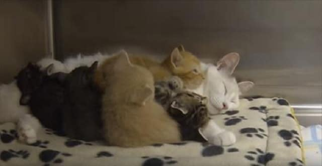 Rescue Cat Gave Birth To Three, But Brough In Three More Kittens!